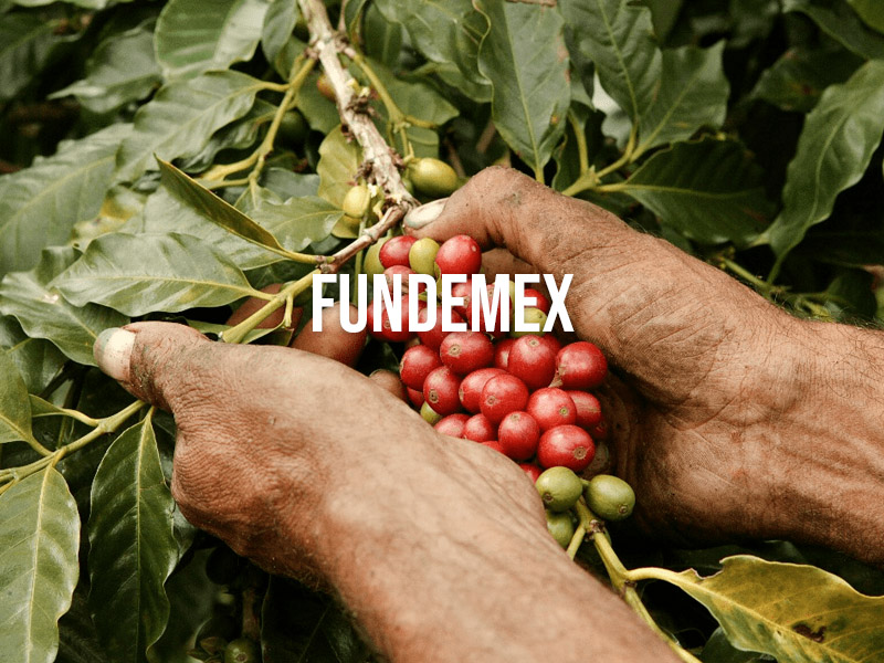 FUNDEMEX programa de fortalecimiento de la empresa social.