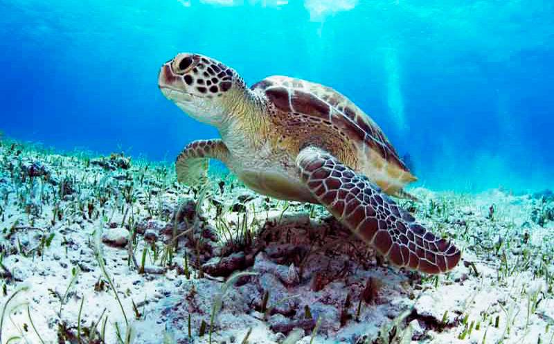 Paradisus Cancún, hotel que protege a la tortuga marina