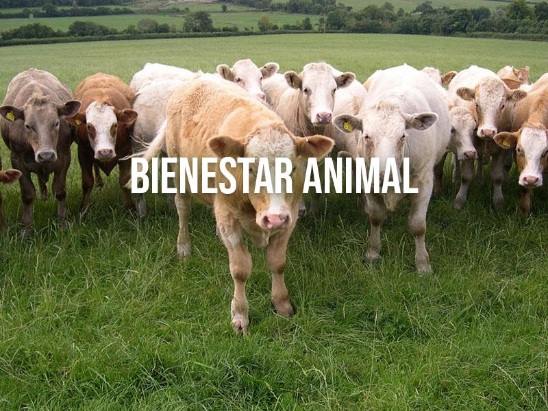 5 Libertades del Bienestar Animal