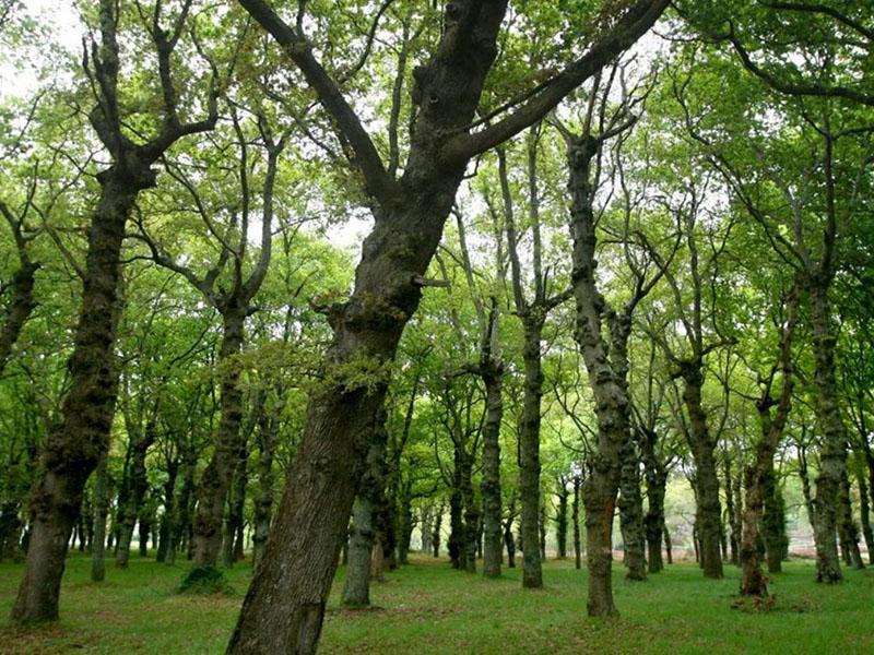 Boehringer Ingelheim suma más de 53,000 árboles plantados en pro de la salud