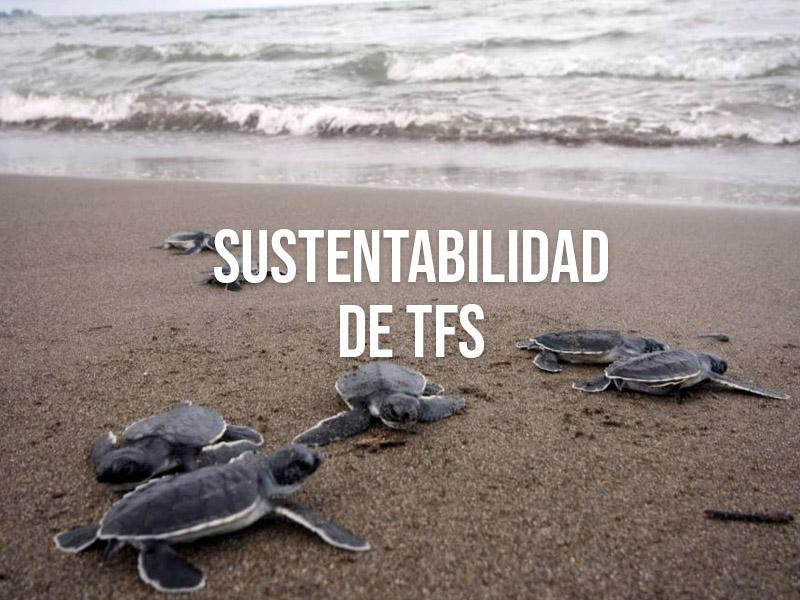 TFS Turbine Field Solutions innova en su modelo de negocio con la sustentabilidad como eje rector