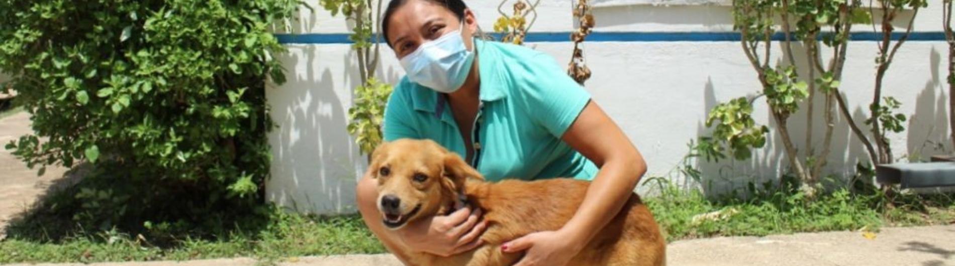 Perros en Mérida