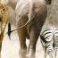 Especies peligro de extinción